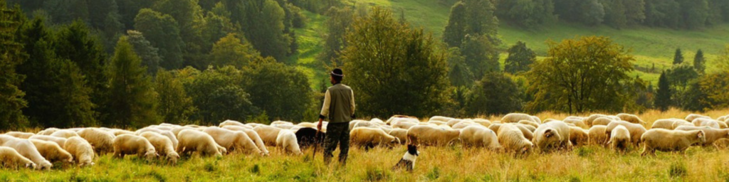 Čo sa dialo na Nedeľu Dobrého Pastiera v Okoličnom